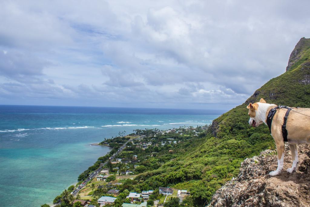 Crouching Lion Hike Hawaii