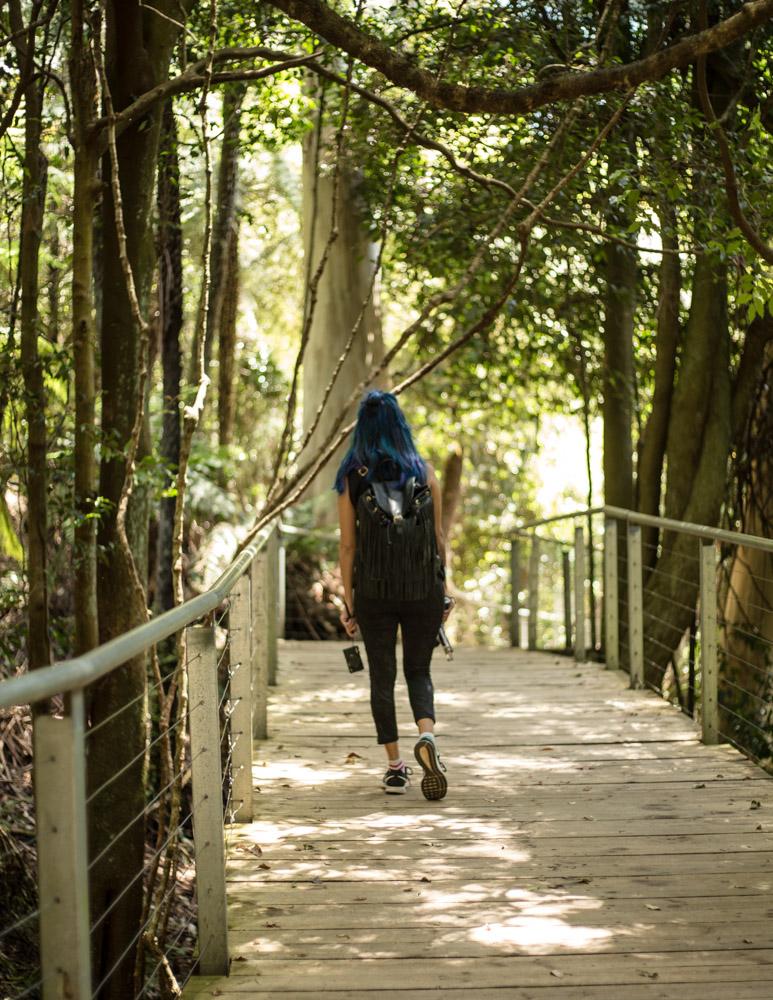 Scenic Walkway Blue Mountains Australia