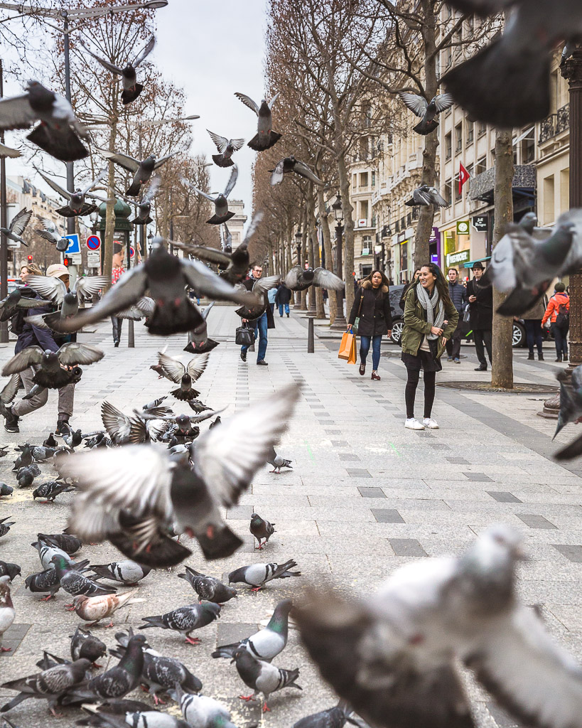 birds champs elysees