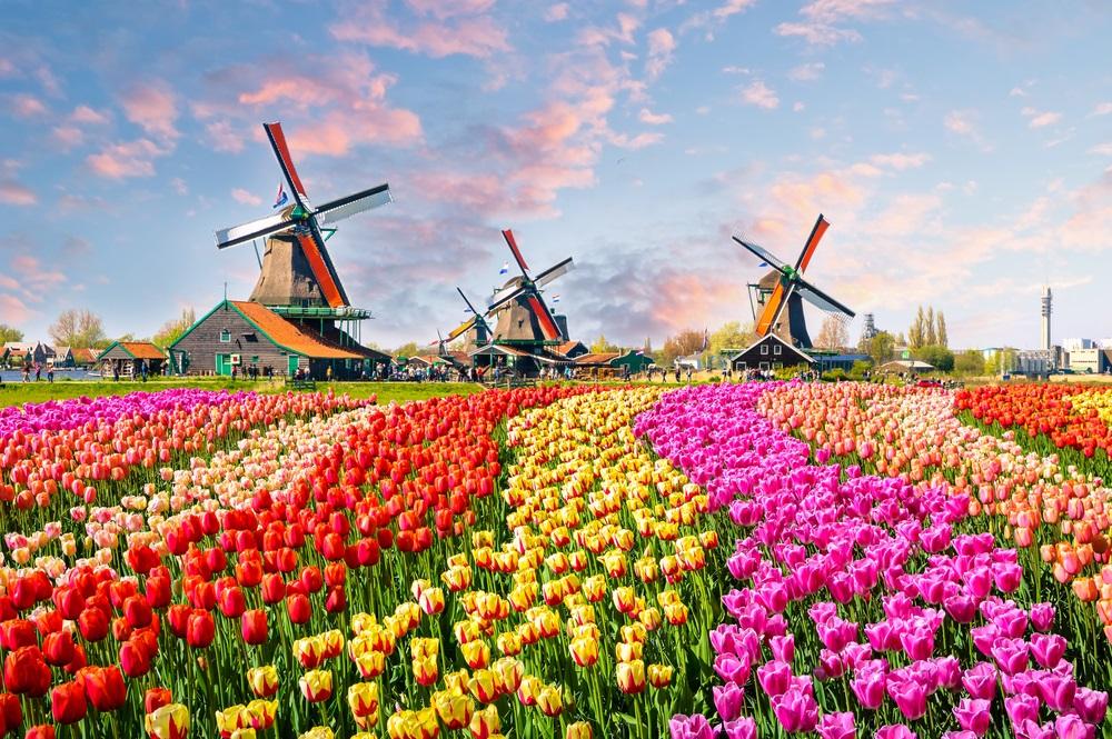 Keukenhof Tulip Amsterdam