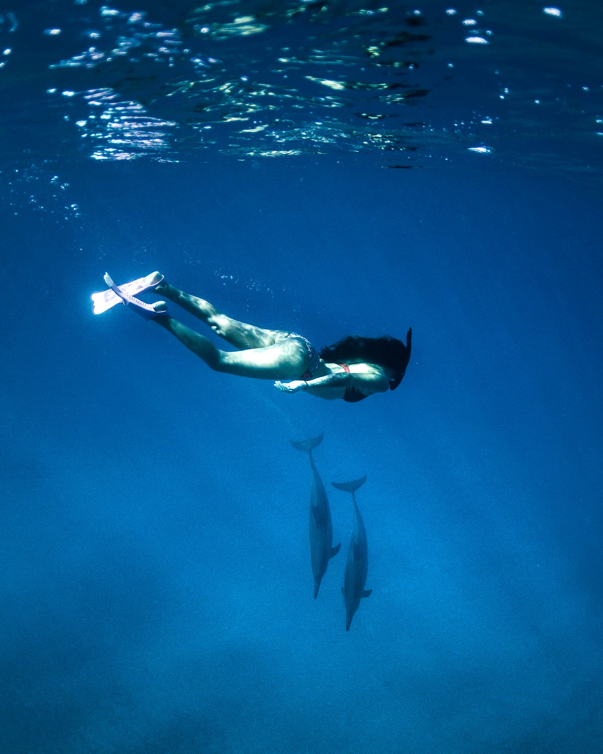 Wild Dolphins Hawaii