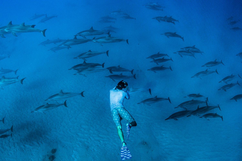 Wild Dolphins Hawaii