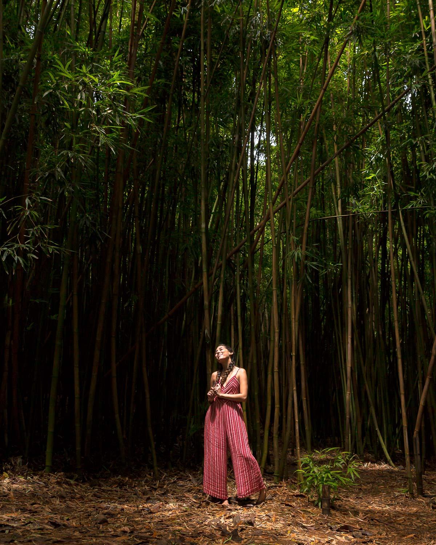 Bamboo Forest Kipahulu Maui